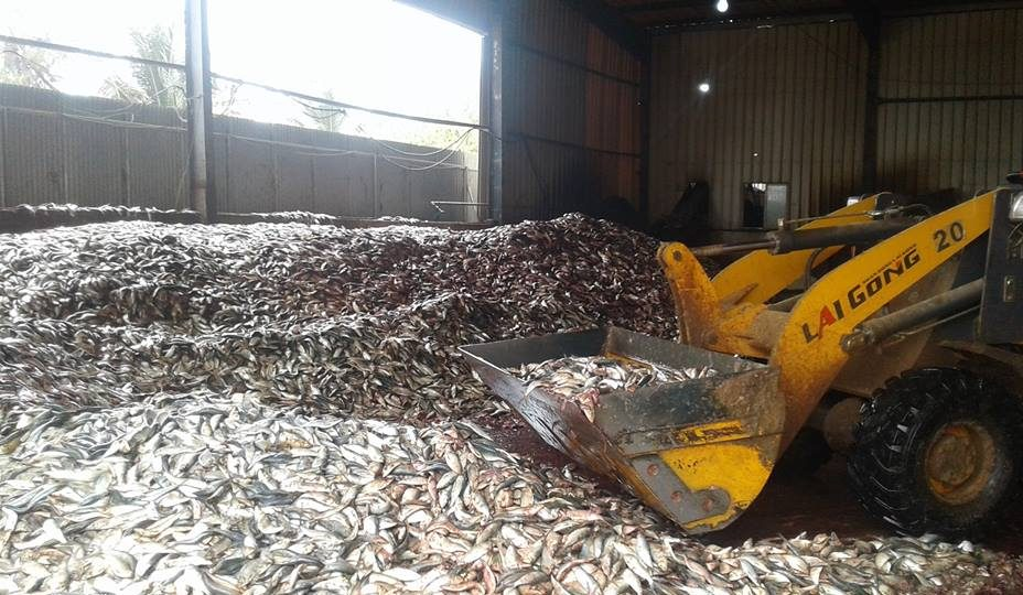 GAMBIA: JXYG Fishmeal Factory Resume Operations