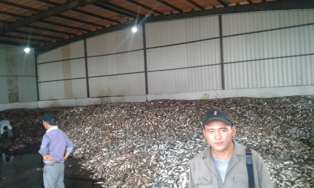 Take a look in Golden Lead Fishmeal factory. This is just a moment of one day. Imagine every day this amount of fish is taken away