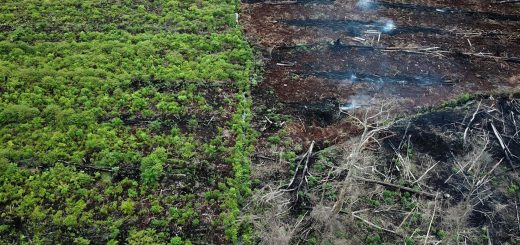 Indonesia Quit Paris Deal Over Palm Oil