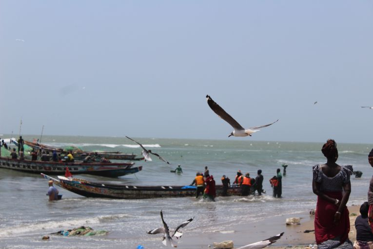 "Gambia ""Sustainable"" Fishing Partnership Agreement  in Numbers, Is it really Sustainable?"