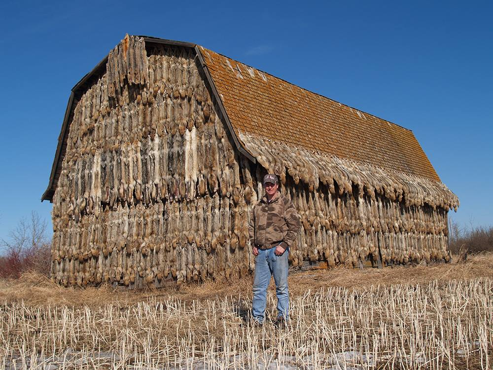 Hunter made a house out of dead wolves in Canada