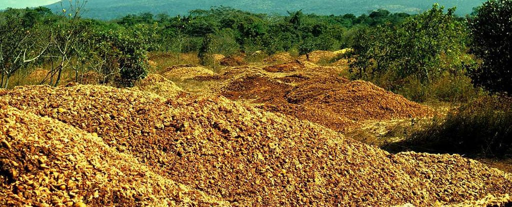 How 12,000 Tonnes of Dumped Orange Peel Grew Into a New Forest