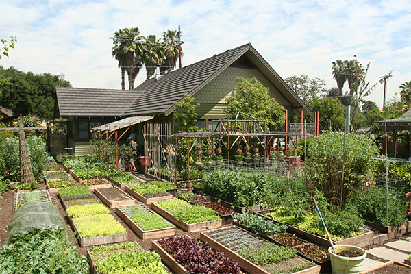 A fifth acre lot, minus the house, garage and driveway, the family has converted the remaining tenth of an acre into a tiny food forest that produces 7000 pounds of food per year with no synthetic fertilizers