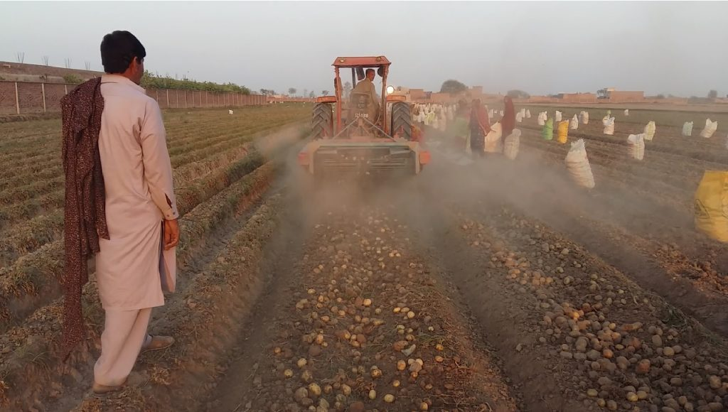 A test with Dutch saltwater potatoes in Pakistan