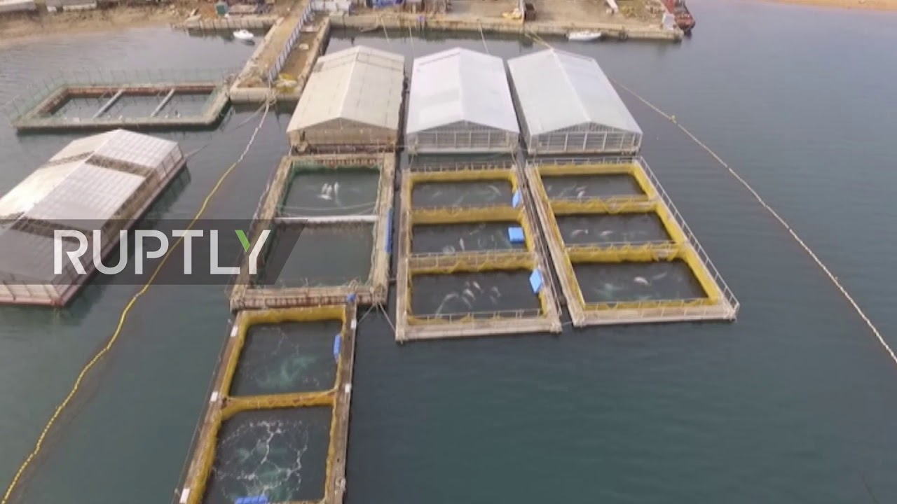 Whale prison discovered in Russia