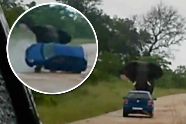 Raging Elephant Attacks Car In Kruger Park Caught On Camera