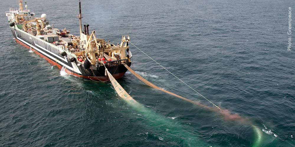 How Gambia Is Selling Its Tuna For 136 Euro Per Ton To The EU