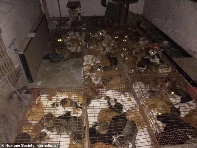 A total of 375 cats in the abattoir were discovered by a pet owner and an animal rescue group on December 1 in the port city of Tianjin when they were out looking for his lost pet cat