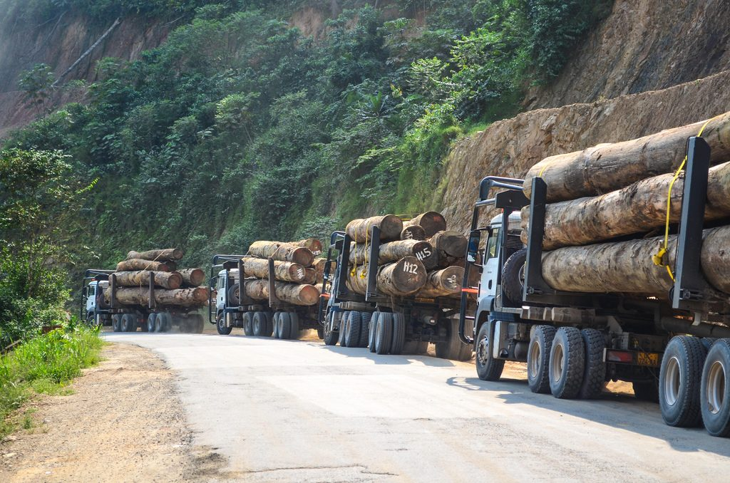 Africa is not poor. Deforestation by Chinese Companies In Cameroon