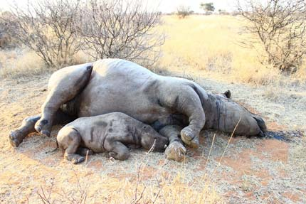 Nine Rhino's Poached In Namibia Since January This Year