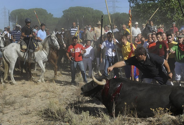 Spain Bans Torture of Bulls During Toro de la Vega Festival