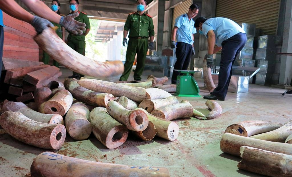 BREAKING: 10 Tonnes of African Ivory Discovered in Vietnam