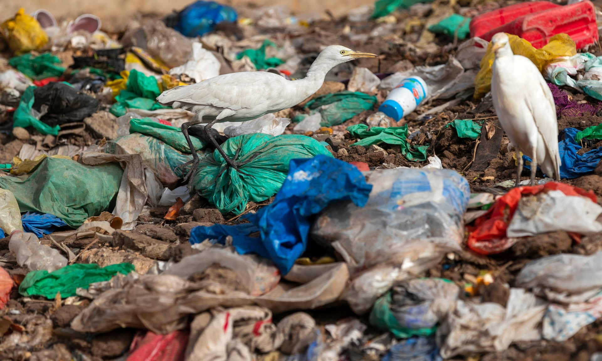 European Parliament Votes To Ban Single-use Plastics