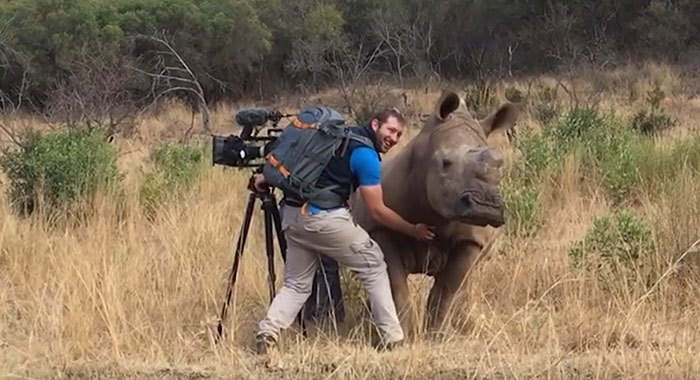 This Wild Rhino Walked Up To A Cameraman, And Demanded A Belly Rub
