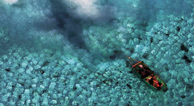 Chinese Clam Poachers Destroying Entire Reef in The Philippines