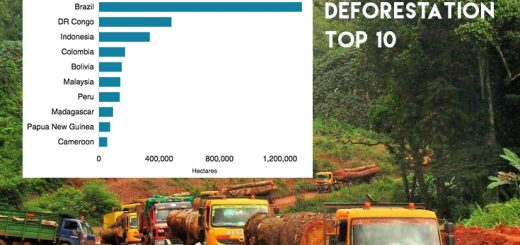 deforestaton top 10 countries