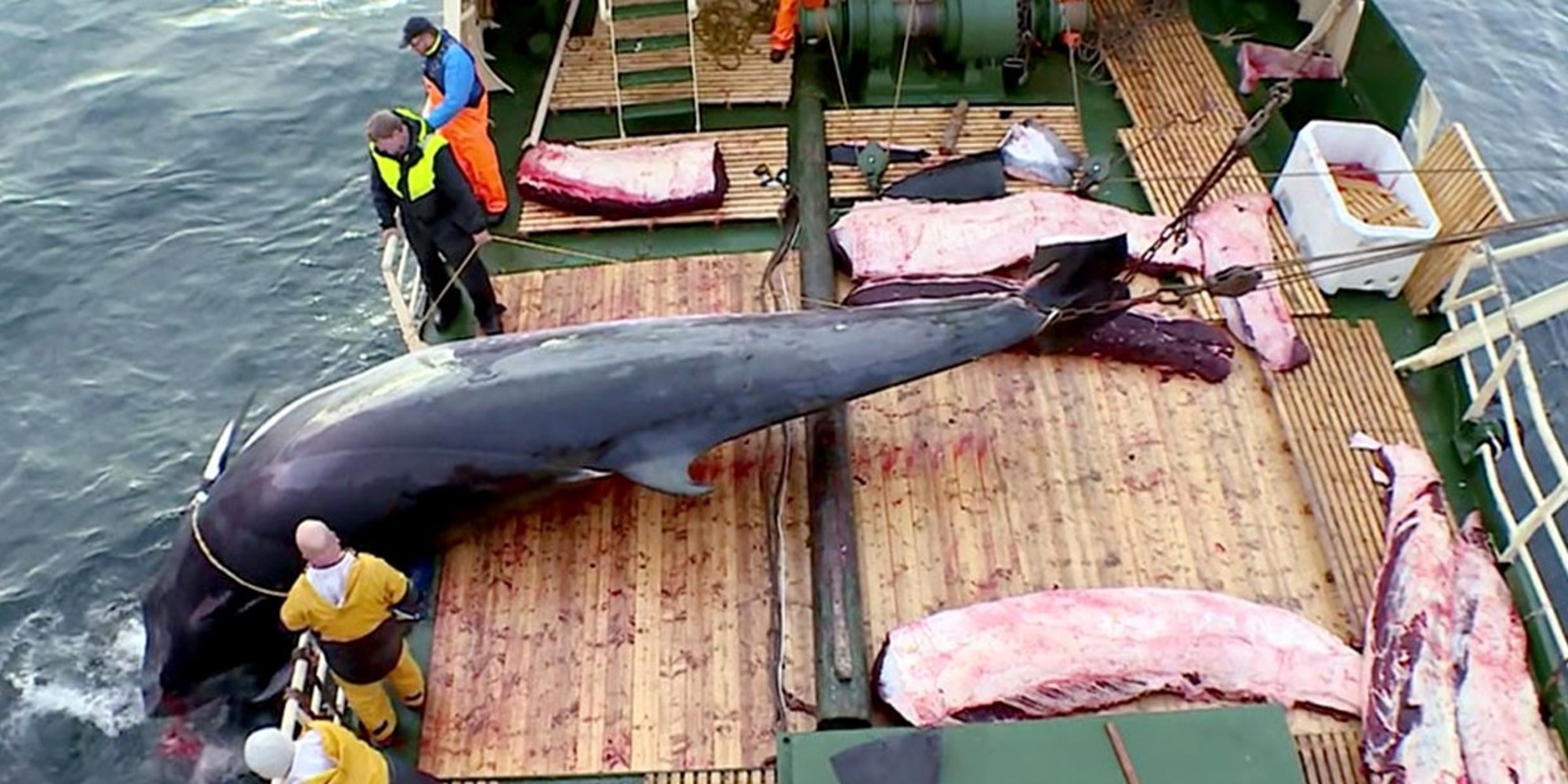 Norway: 15 Whales Already Killed In The First Month Of  2019 Whaling Season