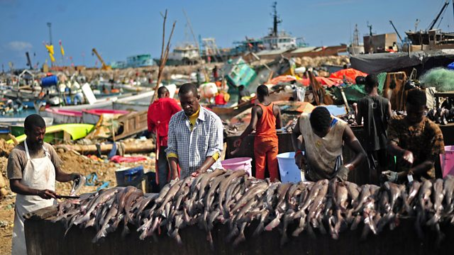 Somalia Government Gives Up Its Fishing Rights To China