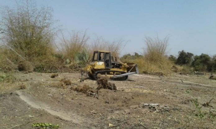 GAMBIA: Bamboo Forest At Jamburr Bulldozed