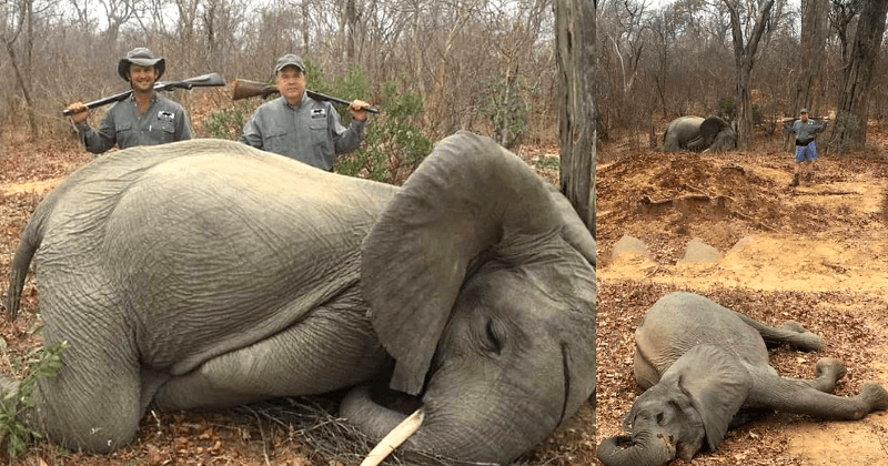 Rich businessman kills elephants