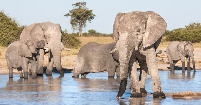 Botswana: 400 elephant hunting licenses to be granted annually, says government