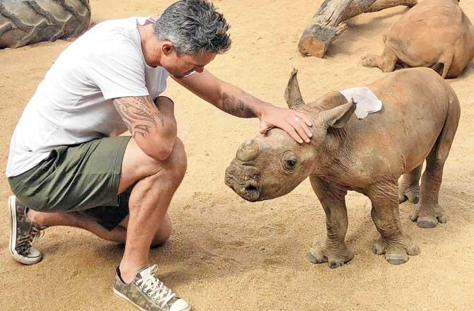 Kevin Pietersen: Government 'could write cheque' to save rhinos now