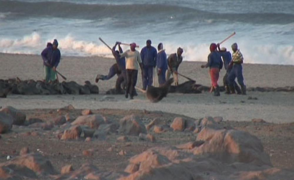 This is Namibia's Secret Annual Seal Massacre
