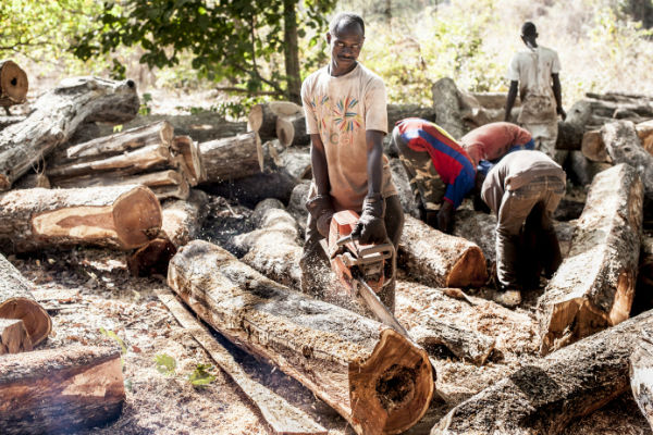 VIDEO: How The Gambia is losing its forests in record speed