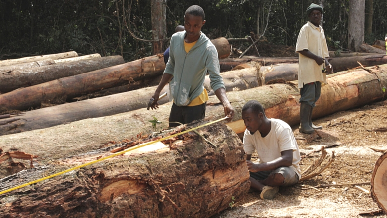 Illegal logging and poverty fuel local tensions in southern Senegal
