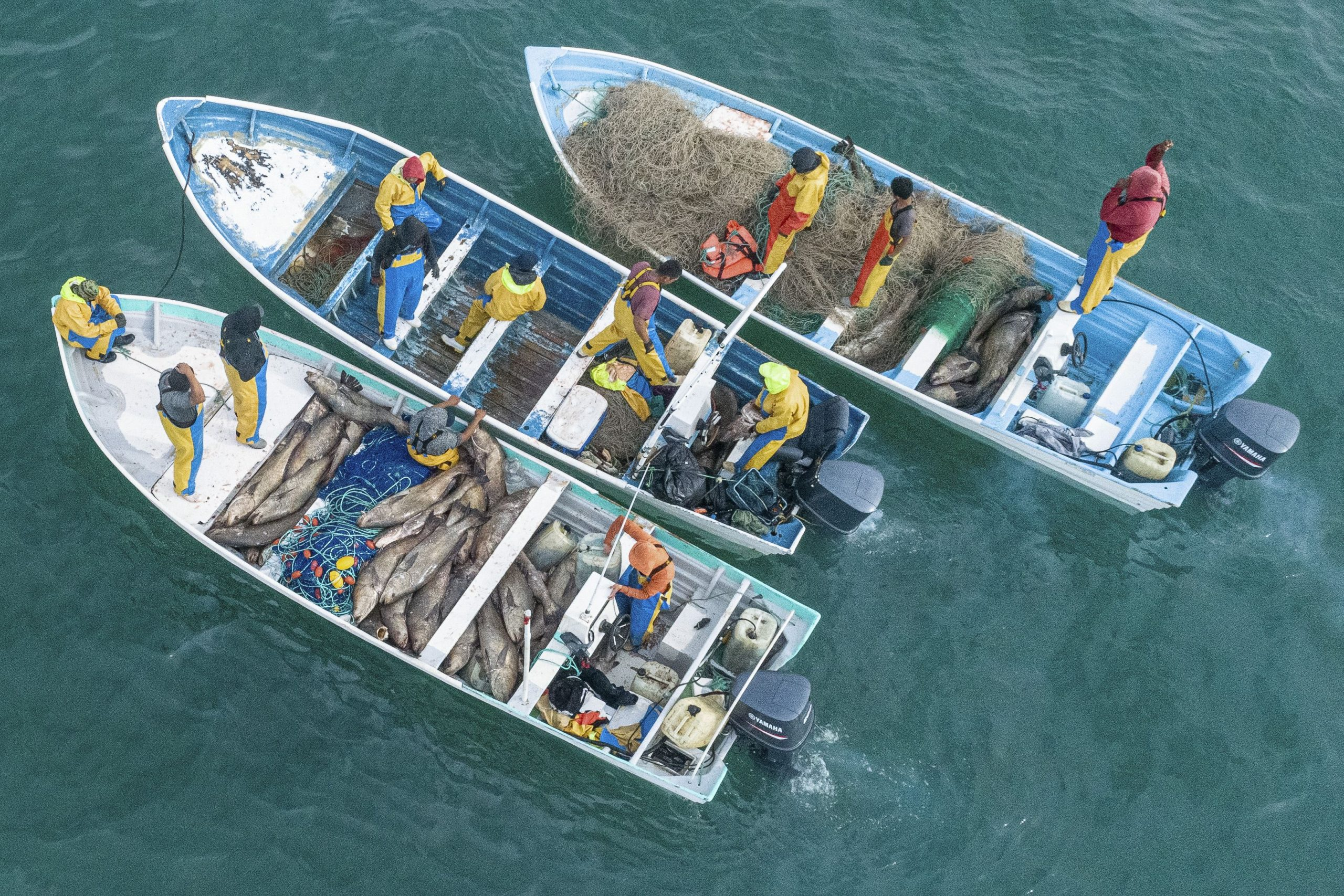 Fishermen Mass to Overwhelm Mexico's Protected Vaquita Porpoises