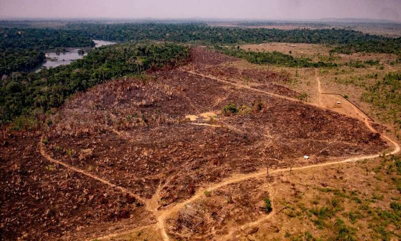 Amazon Deforestation for January Hits Record