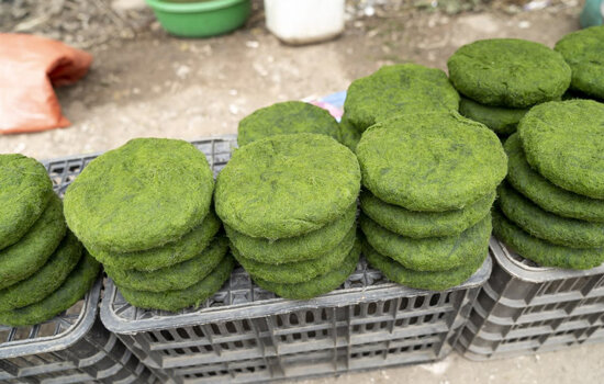 Burgers Made of Microalgae? Future food for thought