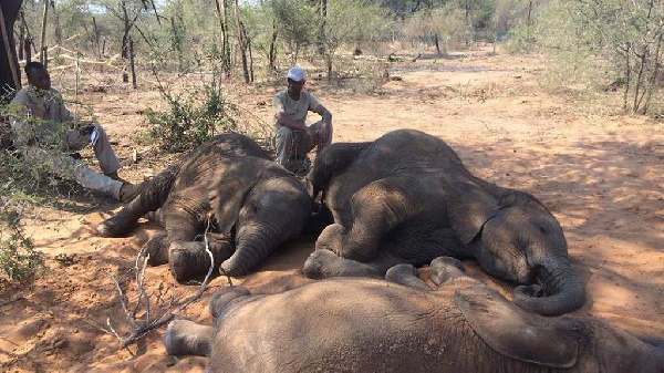 Six Elephants Killed In One Day By Poachers in Ethiopia